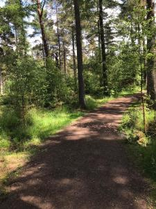 Well maintained path in the forest